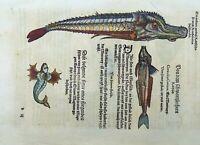 1563 Conrad Gesner - Wrasse 'Meerrapp' Monster 1st Issue - 5 woodcut Folio leaf