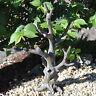 Miniature Fairy Garden Fairy Tree
