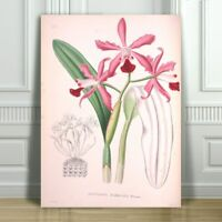 """JEAN LINDEN - Beautiful Pink Orchid #1 - CANVAS ART PRINT POSTER - 12x8"""""""