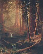 Giant Redwood Trees of California 75cm x 60.6cm by Albert Bierstadt Canvas Print