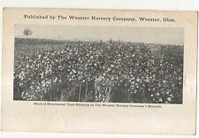 Wooster Nursery Company Advertising, WOOSTER OH Vintage Ohio Postcard