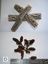 "New listing (3) Cholla Wood,Alder Cones ,Freshwater Shrimp,Crayfish,""20 Free Alder Cones""Cw3"