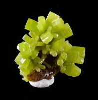 3.5cm Lime Green PYROMORPHITE Cluster from China 6564