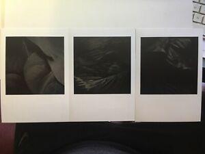 3 ART PHOTOS, 5x7s, beautiful DARK FLORAL LEAVES in B&W, by JOHNNIE EISEN