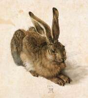 """Young Hare by Albrecht Durer, Giclee Canvas Print, 20""""x23"""""""