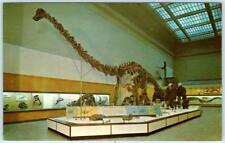 Smithsonian Institution Hall of Dinosaurs Diplodocus Skeleton c1960s Postcard