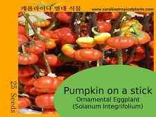 Pumpkin on a Stick - Ornamental Eggplant (Solanum Integrifolium) 25 Seeds