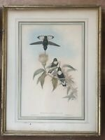 ANTIQUE GOULD HUMMINGBIRD LITHOGRAPH Hand Colored GREEN-THROATED INCA Hullmandel
