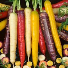 1000 Carrot Seeds Mix-RAINBOW-Eight Varieties-Heirloom Vegetable-Colorful&Crispy