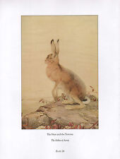 BEAUTIFUL VINTAGE BIRD PRINT ~ HARE & THE TORTOISE ~ FABLES OF AESOP ~  DETMOLD
