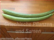 Striped Armenian Gurke * knackige Salat-Gurken* 5 Samen