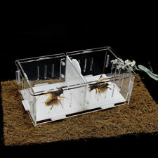 1X Cricket Grasshopper Fighting Transparent Acrylic Viewing Box Cage