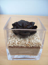 Vase Glass With Artificial  Brown Succulent  & 3 Layers Fixed Sand & Stone New
