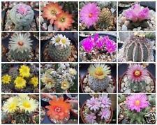 Cactus variety mix rare globular columnar garden cacti seed succulents 50 seeds