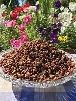 Frisch Bienenbrot, Perga, Fermentierter Blütenpollen, 500g.