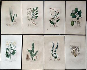 Antique Hand Coloured Copperplate Engravings from Flore Médicale c1814 Turpin