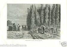 La Cueillette du Houblon Dessin de Frédéric Lix Alsace Elsass GRAVURE PRINT 1888
