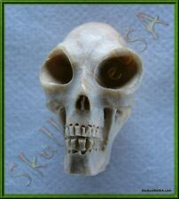 """Alien"" Crocodile Wood Skull Bead - Paracord - Leather - Jewelry - US Seller!"