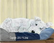 Dog Art,Painting,White Schnauzer Print #8, By P K Ufnal