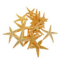 20pcs Tiny Starfish Decorations DIY Crafts Aquarium Micro Landscape Decor