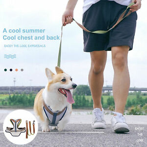 Pet Traction Rope Bright Color Comfortable to Wear Soft Flexible Pet Accessories