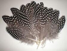 lot de 14 plumes pintade 10 cm
