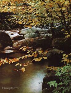 1950s Vintage Nature Landscape Forest Stream Rocks ELIOT PORTER Photo Art 16x20