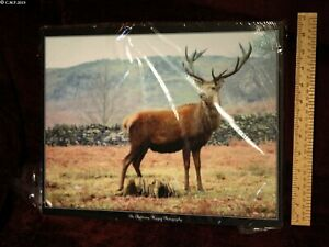Stag Mounted Print