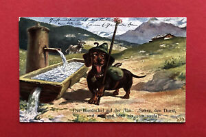 Künstler AK DACKEL 1910 Der Bierdackel auf der Alm Teckel ( 59995