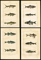 1844 Fishes, Mullet, Sardines Lot of Four Hand-Colored Antique Prints - Lacepede