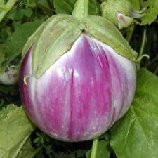 Vegetable Aubergine Bianca de Rosa Italian Eggplant appx 300 seeds