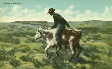 Riding A Yearling Cowboy Riding Cow Western 1910 Postcard
