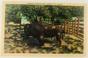 Vintage Garden City Kansas KS Buffalo in Finnup Park Linen Postcard