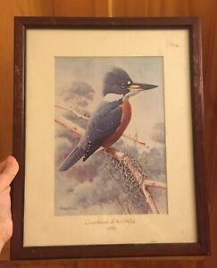 Vtg 1996 Guardians Of The Wild By DIANE PIERCE Bird Wildlife Framed Under Glass