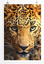 60x90cm Tierfotografie – Porträt eines Leopards