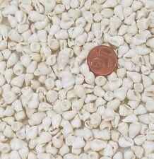 Muscheln Schnecken  100 Stück zum Auffädeln hell 7 bis 14mm
