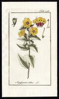 Antique Botanical Print-HYOSCYAMUS ALBUS-HENBANE-TAB 275-Zorn-1796