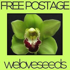 LOCAL AUSSIE STOCK - Green Orchid, Cymbidium Flower Seeds ~10x FREE SHIP