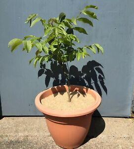 100% natural jute mulch mat / tree spat