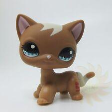 Littlest Pet Shop LPS Toy #1170 Mocha Brown Tan Curls Short hair Kitten Cat