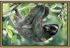 Sloth Photographs  - New - fridge magnets - Stocking fillers