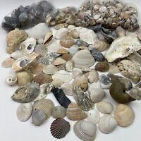 Large Lot of Seashells Different Species Crafts Decor Aquarium Over 5 Pounds