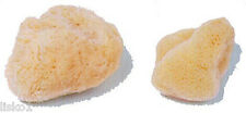 "Kingsley Natural Sea Make up Sponge  2"" ( 2-PK )"