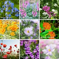80,000 WILDFLOWER SEEDS - HUMMINGBIRD, BEE & BUTTERFLY - WILD FLOWER POLLINATOR
