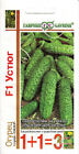 Seeds Cucumber «Ustiug F1» Vegetable Organic  Russian GAVRISH