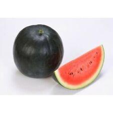 pastèque noir 10 graines