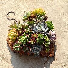 Metal Hanging plant basket heart shape Succulent flower pot Decor Basket