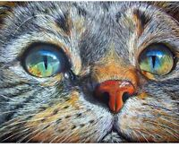 Cat Face Full Square Drill Diamond 5D DIY Painting Hand Embroidery Kits For Home