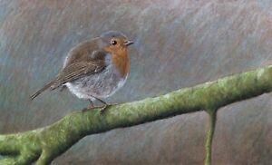 Original pastel drawing European robin Bird
