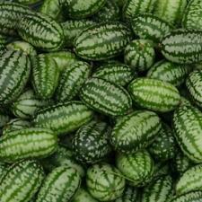 Pack Reyes semillas para jardín de verduras Mini Pepino 'Cucamelon' semilla de calidad